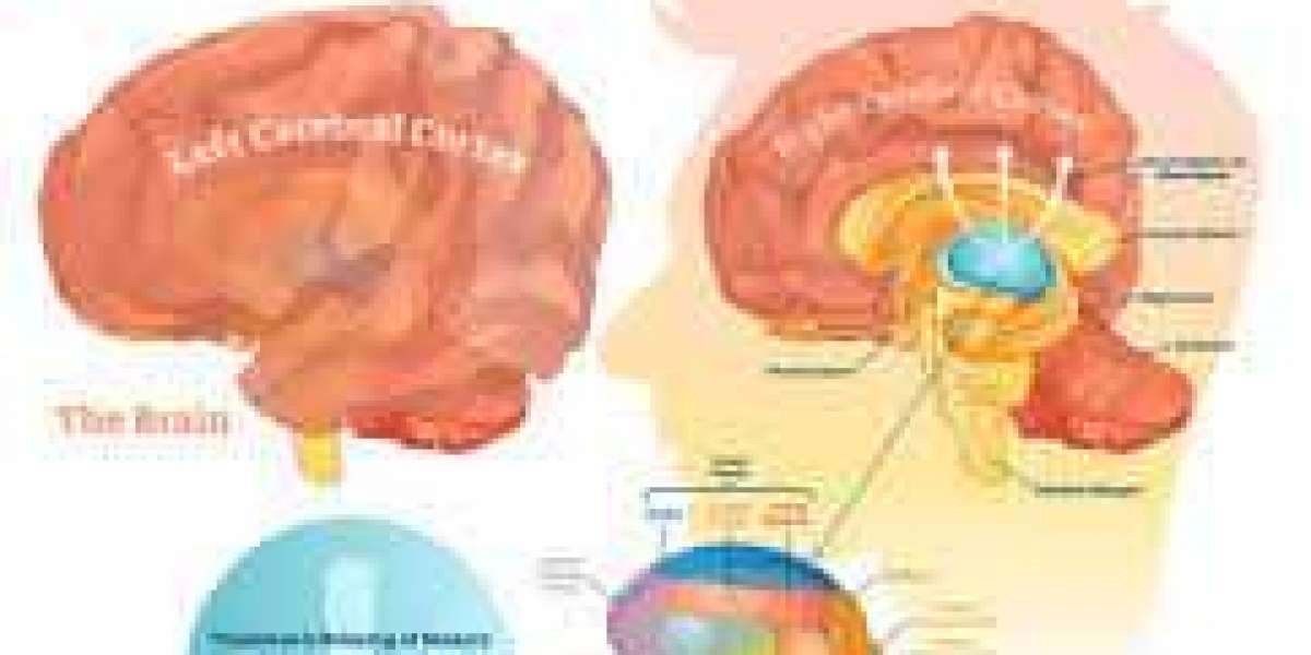 Stanford Researchers Devise FLiCRE to Understand Brain in Action